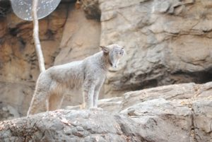 biodome-montreal-lince